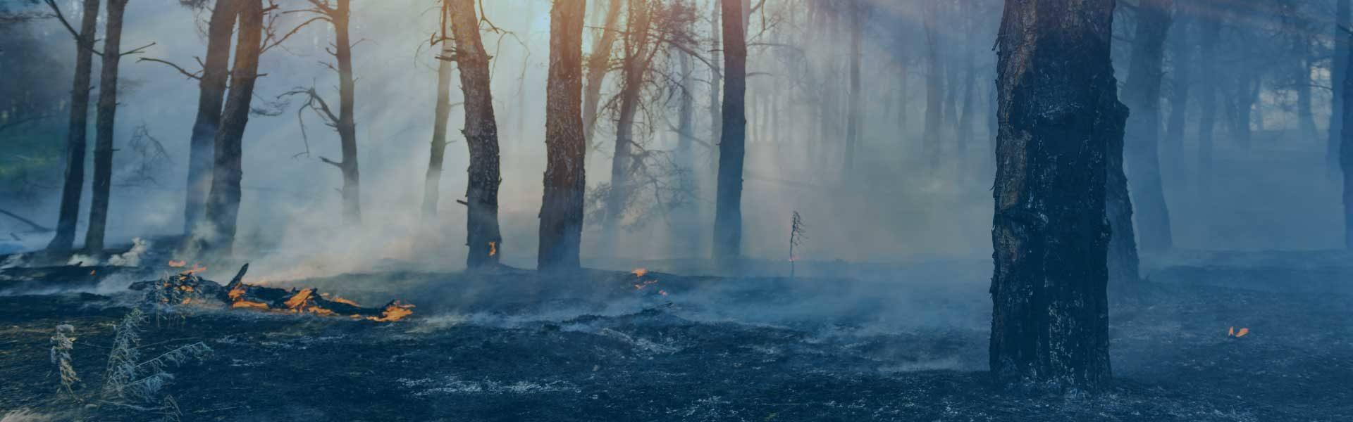 Smoke and Ash Claims